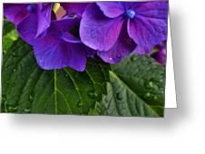 Spring 2013 Greeting Card