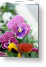 Viola Tricolor Heartsease Greeting Card