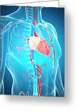 Human Vascular System Greeting Card