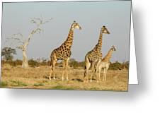 Africa, Botswana, Chobe National Park Greeting Card