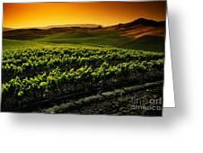 In A Vineyard Greeting Card