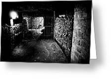 Skulls And Bones In The Catacombs Of Paris France Greeting Card