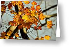 22nd Of September Greeting Card by JAMART Photography