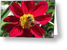 Dahlia From The Showpiece Mix Greeting Card