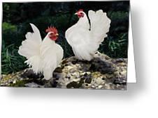 23. Pair White Serama Greeting Card