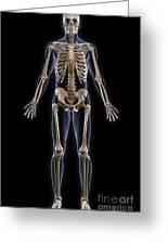 The Skeleton Greeting Card