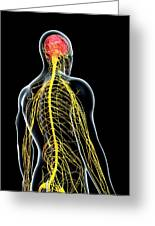 Male Nervous System Greeting Card