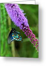 243 Butterfly Greeting Card