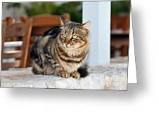 Cat In Hydra Island Greeting Card