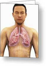 The Respiratory System Greeting Card