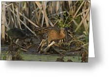 King Rails In A Wetland Greeting Card