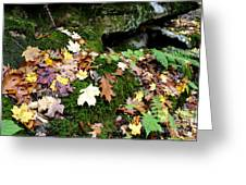 Autumn Monongahela National Forest Greeting Card
