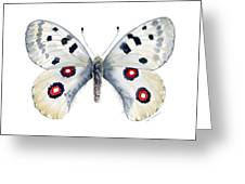 28 Apollo Butterfly Greeting Card