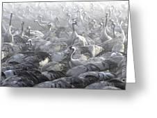 Flock Of Common Crane  Greeting Card