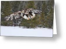 3 1/2 Year Eagle Landing Gear Down Greeting Card
