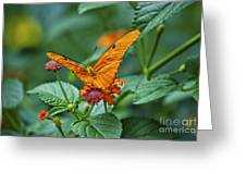 3 2 1 Prepare For Butterfly Liftoff Greeting Card