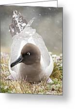 A Light Mantled Albatross Greeting Card