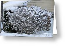 A Wintery View Along Conifer Drive In Burnt Hills Greeting Card