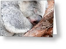 Adorable Koala Bear Taking A Nap Sleeping On A Tree Greeting Card