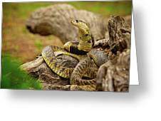 African Snakes Greeting Card