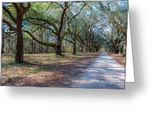 Allee Of Oaks Greeting Card