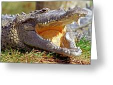 American Crocodile Greeting Card