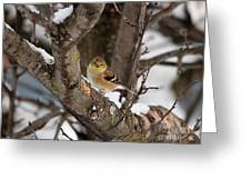 American Goldfinch In Winter Greeting Card