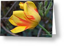 Tulip In The Wind Greeting Card