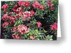Antigua Flowers Greeting Card