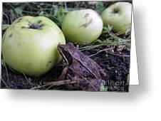 3 Apples And A Frog Greeting Card