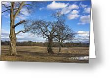 3 Appleton Trees Greeting Card
