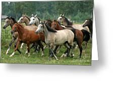 Arabian Horses Greeting Card