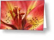 Arsenal Lily Greeting Card