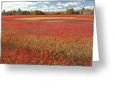 Autumn Blueberry Field Maine Greeting Card