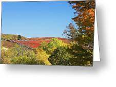 Autumn Colors In Maine Blueberry Field And Forest Greeting Card