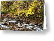 Autumn Elk River Greeting Card