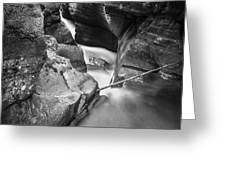 Avalanche Gorge Glacier National Park  Bw  Greeting Card