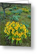 Balsamroot Greeting Card