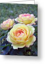 3 Beautiful Yellow Roses Greeting Card by Jo Ann