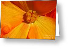 Begonia Named Nonstop Apricot Greeting Card