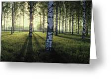Birch Trees By The Vuoksi River Greeting Card