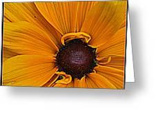 Black Eyed Susan Greeting Card