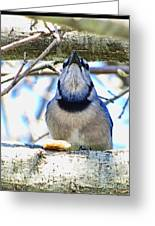 Blue Jay With Bread  Greeting Card