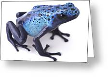 Blue Poison Dart Frog Greeting Card