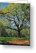 Bok Tower Gardens Oak Tree Greeting Card