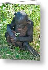 Bonobo Baby Greeting Card