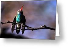 Broad Bill Hummingbird Greeting Card