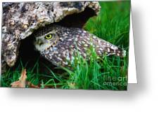 Burrowing Owl  Greeting Card