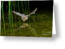 California Leaf-nosed Bat At Pond Greeting Card