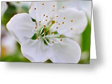 Cherry Flowers Greeting Card